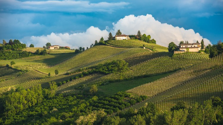 Vineyards of Langhe, Piedmont, UNESCO world heritage; Shutterstock ID 432601711